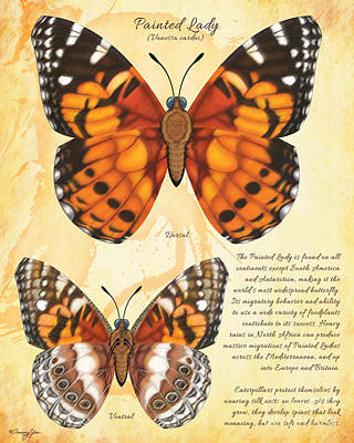 Painting - Painted Lady Butterfly by Tammy Yee