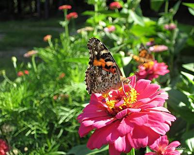 Photograph - Painted Lady Butterfly With Zinnias by MTBobbins Photography