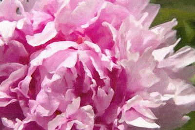 Painted Pink Peony  Art Print