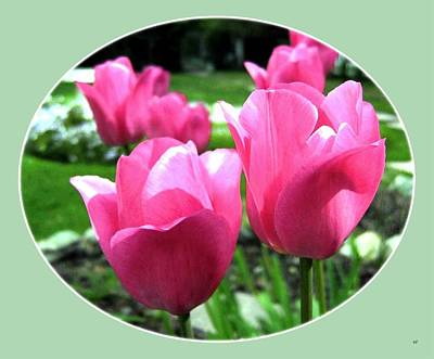 Digital Art - Painted Pink Tulips by Will Borden