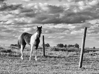 Black And White Horses Digital Art - Painted Pony by Tom Druin