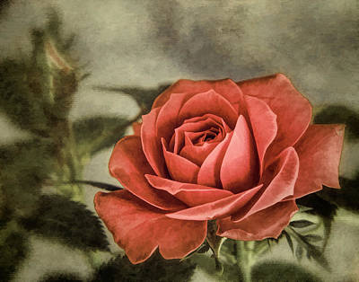 Photograph - Painted Rose by David and Carol Kelly