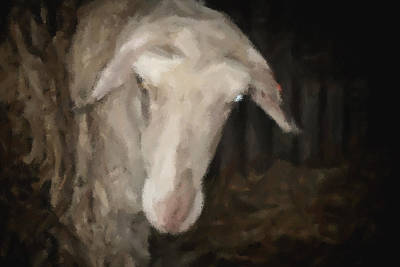 Painting - Painted Sheep In A Photograph by Doc Braham