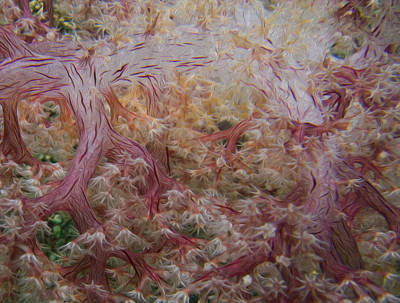 Photograph - Painted Soft Coral by Terry Cosgrave