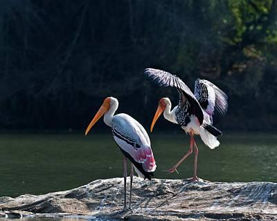 Painted Storks Art Print by K Jayaram