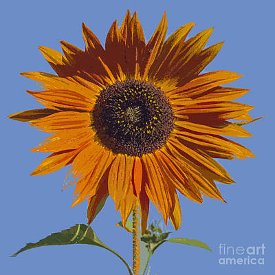 Photograph - Painted Sunflower by Sonya Lang