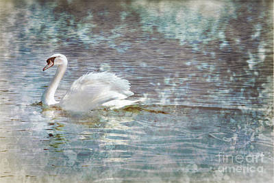 Photograph - Painted Swan by Kelly Morrow