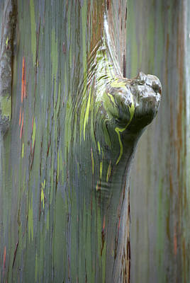 Photograph - Painted Tree by Jackie Farnsworth