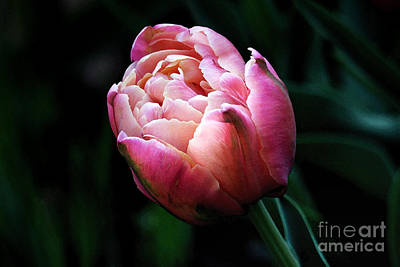 Digital Art - Painted Tulip by Trina  Ansel