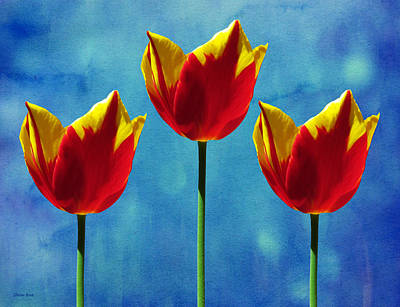 Photograph - Painted Tulip Triplets by Shawna Rowe