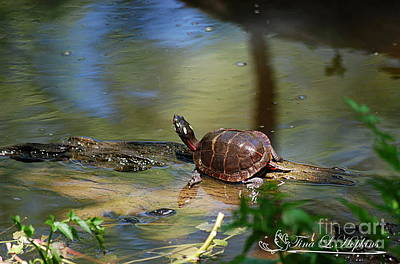 Photograph - Painted Turtle 20130523_16 by Tina Hopkins