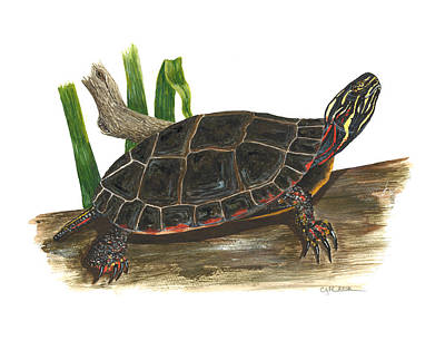 Painting - Painted Turtle by Cindy Hitchcock