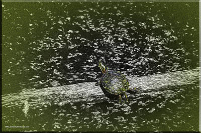 Amphibians Digital Art - Painted Turtle Sleeping Like A Log by LeeAnn McLaneGoetz McLaneGoetzStudioLLCcom