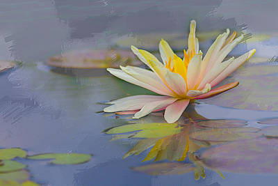 Laura James Photograph - Painted Waterlily by Laura James