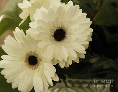 Photograph - Painted White Flowers by Nancy Dempsey