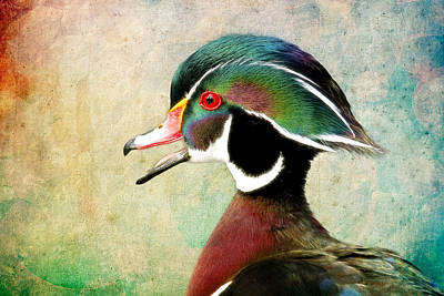 Photograph - Painted Wood Duck by Steve McKinzie