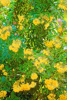 Painted Yellow Turmpet Flowers Original