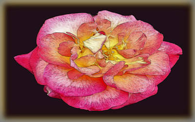 Painted Rose Art Print by Dennis Dugan