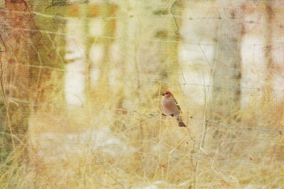 Painterly Image Of A Male Pine Grosbeak Print by Roberta Murray