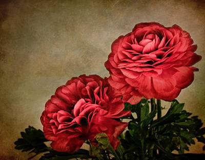 Photograph - Painterly Ranunculus by David and Carol Kelly