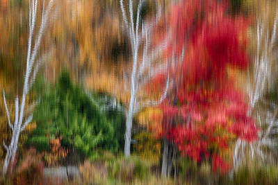 Photograph - Painterly Reflection by Denise Bush