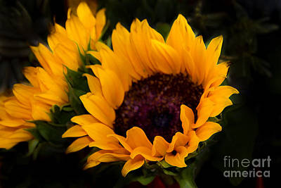 Painting Of Sunflowers Art Print by Al Bourassa