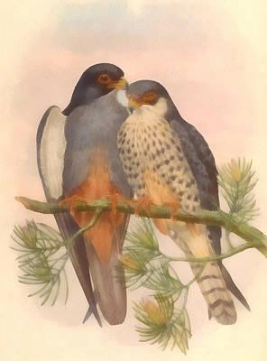 Falcon Digital Art - Pair Amur Falcons by Vintage File Collection