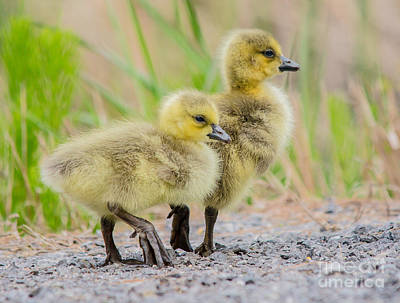 Photograph - Pair Of Cuties by Cheryl Baxter