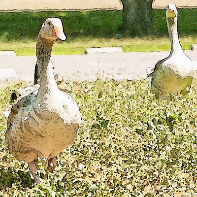 Photograph - Pair Of Geese by Artist and Photographer Laura Wrede