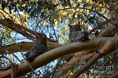 Photograph - Pair Of Great Horned Owls by Afroditi Katsikis