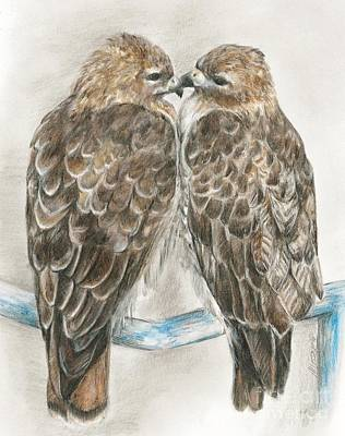 Drawing - Pair Of Hawks by Meagan  Visser