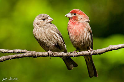 Pair Of House Finches In A Tree Art Print by Jeff Goulden