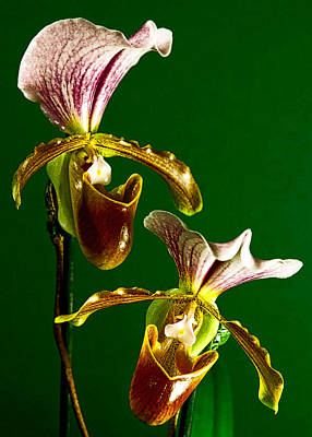 Pair Of Lady Slipper Orchids Art Print by Elf Evans