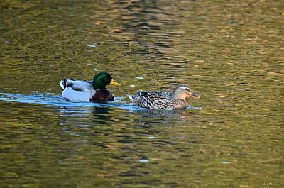 Photograph - Pair Of Mallards by Maria Urso