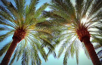 Photograph - Pair Of Palms Vegas Style by Donna Spadola