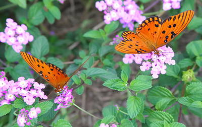 Butterfly Photograph - Pair Of Passion Butterflies 2 by Cathy Lindsey