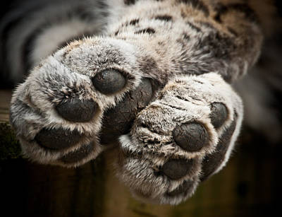 Photograph - Pair Of Paws by Chris Boulton