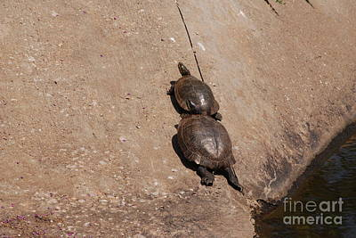 Photograph - Pair Of Turtles by Mark McReynolds