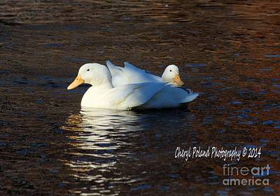 Photograph - Pair Of White Geese by Cheryl Poland