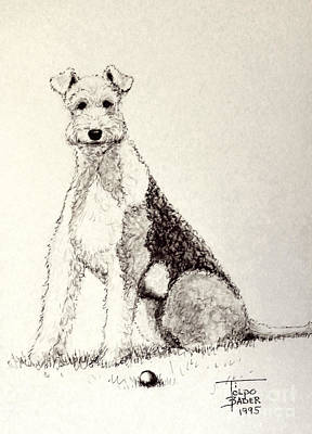 Drawing - Pal The Airedale by Art By - Ti   Tolpo Bader