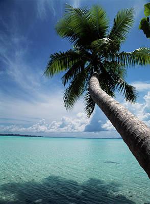 Palau, Micronesia, Palm Tree At Palau Art Print