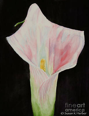 Painting - Pale Calla by Susan Herber
