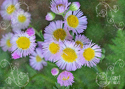 Photograph - Pale Pink Fleabane Blooms With Decorations by Debbie Portwood