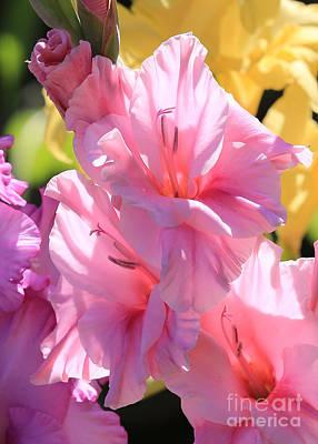 Photograph - Pale Pink Gladiolus Closeup by Carol Groenen