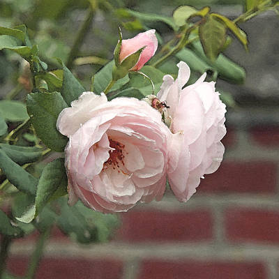 Brick Photograph - Pale Pink Roses On Brick by Brooke T Ryan