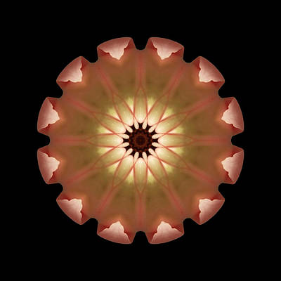 Print featuring the photograph Pale Pink Tulip Flower Mandala by David J Bookbinder