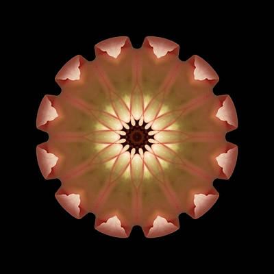 Pale Pink Tulip Flower Mandala Art Print