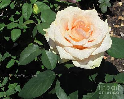 Photograph - Pale Rose by Kathie Chicoine
