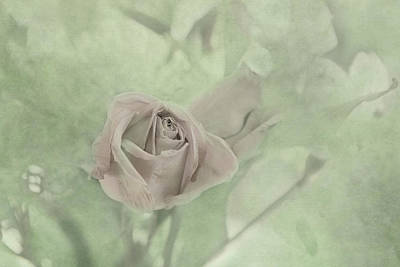 Photograph - Pale Rose by Katie Wing Vigil