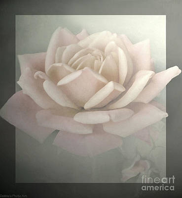 Photograph - Pale Rose Photoart II by Debbie Portwood